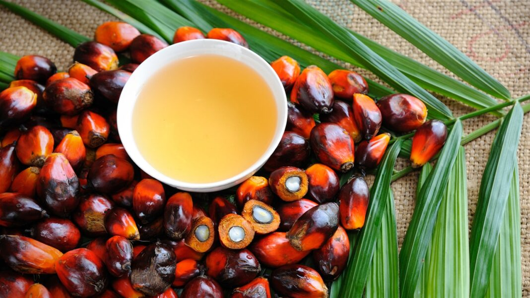 export, united kingdom, indonesia, palm oil, coffee