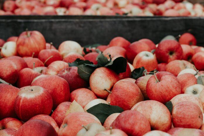 apple skin, mango skin, bag, eco-friendly